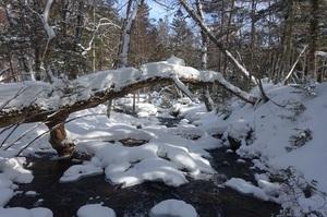 冬の阿寒川散策