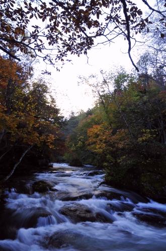 阿寒川と滝見橋の紅葉