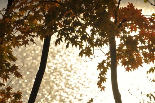 静かな湖畔の秋