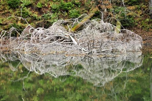 シュンクシタカラ湖へ