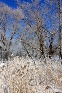 冬の華咲く森