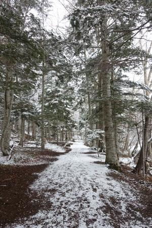 春の初物と一転冬景色