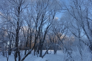 氷点下の朝と夜と