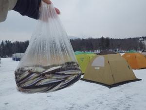 阿寒湖氷上ワカサギ釣り!