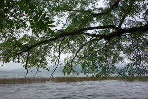 6月の阿寒湖