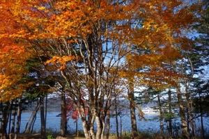 阿寒湖今日の紅葉
