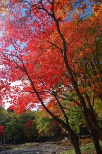 阿寒湖光の森の紅葉
