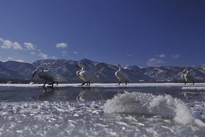 白鳥の湖屈斜路湖へ前編