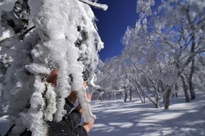 樹氷のそうがく台へ