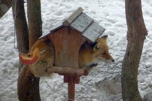 真冬の訪問者