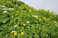 花の大雪山 黒岳へ前編