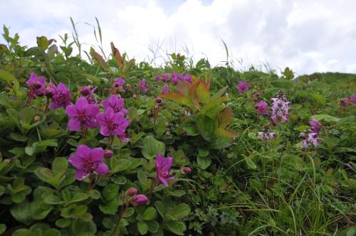 地元に愛される花の山、西別岳