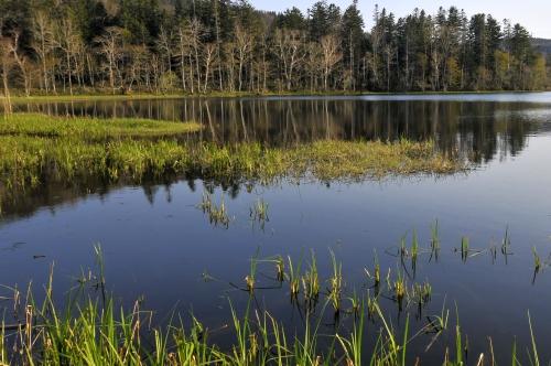 静かな湖畔の森の中