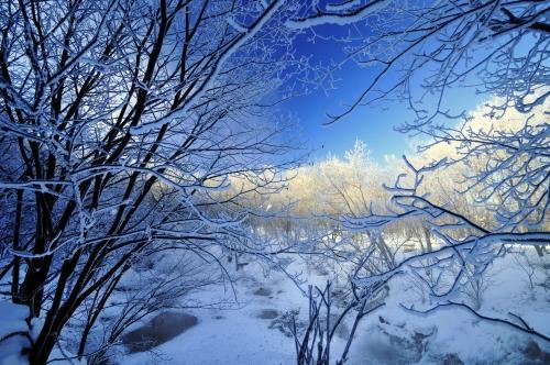 冬日の霧氷林