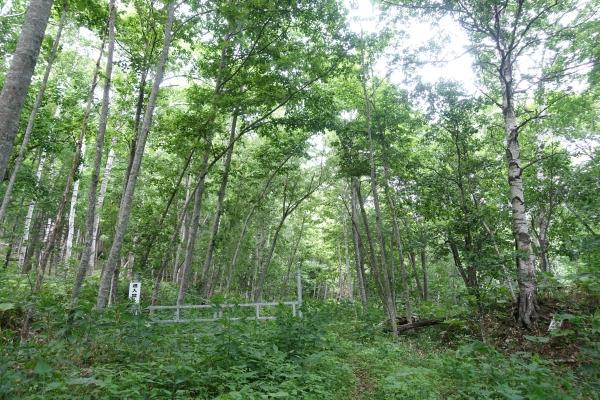 閉鎖されている旧釧北峠への道
