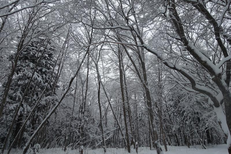 雪ととのいました!