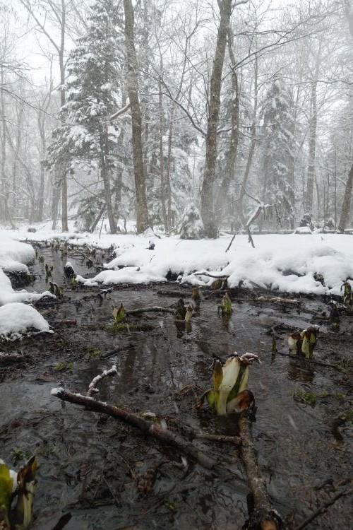 春待つ雪の阿寒湖