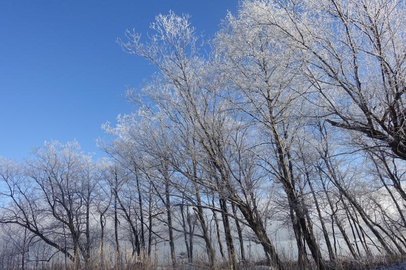 氷点下16℃の朝